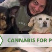 Safe and Available Cannabis for Pets: First Step, AB 2215 Signed Into Law!